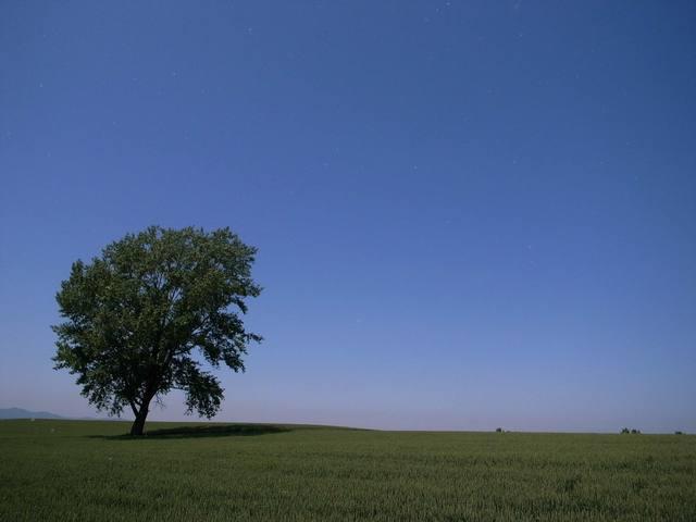 哲学の木から白い綿毛が飛んでくる