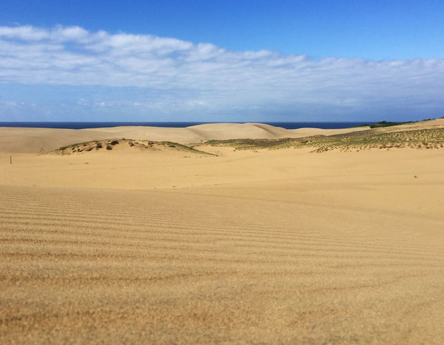 鳥取砂丘の砂紋
